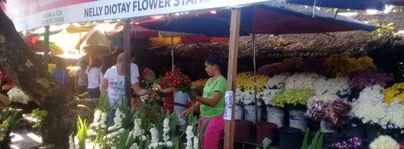 All Soul's/All Saints' Day: Flower prices double