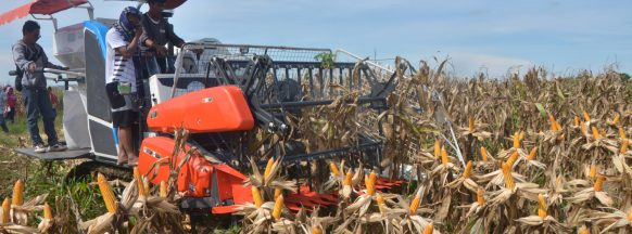 Negros Occidental boasts higher than expected corn harvest