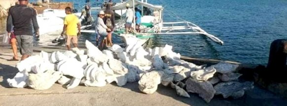 Fishermen arrested after 127 giant  clams confiscated in Sagay City