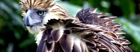 Philippine Eagle Week comes to a close today