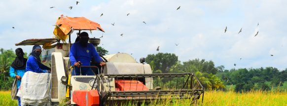 39% hike in wet season palay  production in W. Visayas eyed